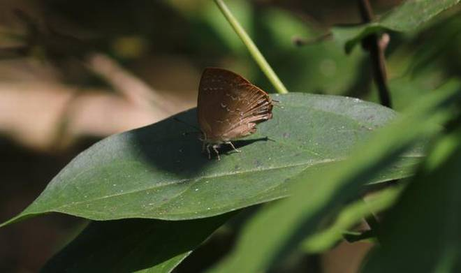 Butterfly survey Aralam